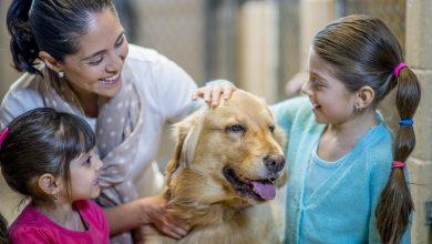 Kleine Hunderassen Bilder Kostenlos Herunterladen 390x220 - Kleine Hunderassen Bilder Kostenlos Herunterladen