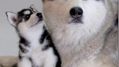 Kleine Hunderassen Bilder Und Namen Für Whatsapp 390x220 - Kleine Hunderassen Bilder Und Namen Für Whatsapp