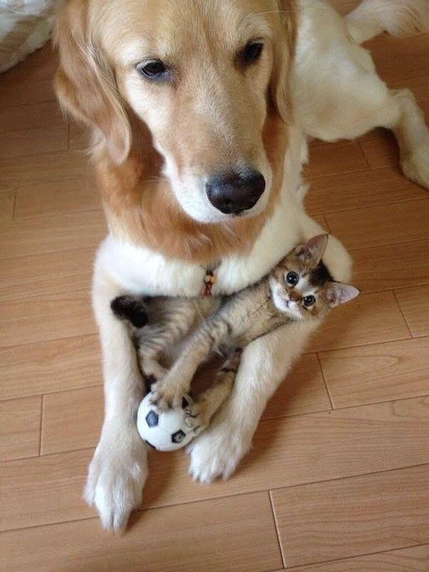 Kleine Hunderassen Bilder Und Namen - Kleine Hunderassen Bilder Und Namen
