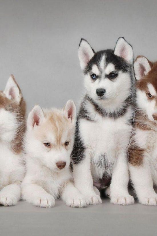 Kleine Hunderassen Bilder - Kleine Hunderassen Bilder