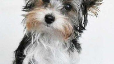 Kleine Hunderassen Liste 390x220 - Kleine Hunderassen Liste