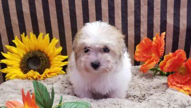 Kleine Hunderassen Liste Mit Bild 390x220 - Kleine Hunderassen Liste Mit Bild