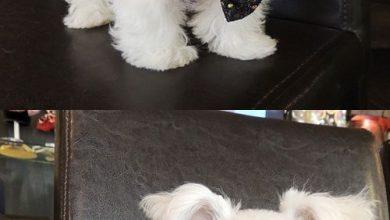 Kleine Hunderassen Mit Bild Und Namen 390x220 - Kleine Hunderassen Mit Bild Und Namen