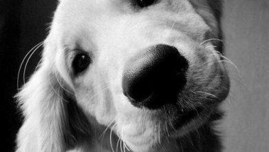 Kleine Hunderassen Mit Bilder Für Facebook 390x220 - Kleine Hunderassen Mit Bilder Für Facebook