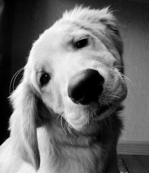 Kleine Hunderassen Mit Bilder Für Facebook - Kleine Hunderassen Mit Bilder Für Facebook
