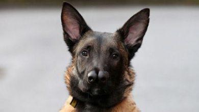 Kleine Hunderassen Mit Namen 390x220 - Kleine Hunderassen Mit Namen