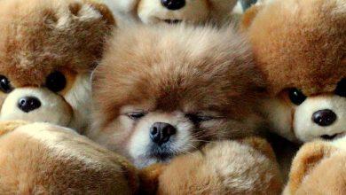 Kleine Hunderassen Namen 390x220 - Kleine Hunderassen Namen