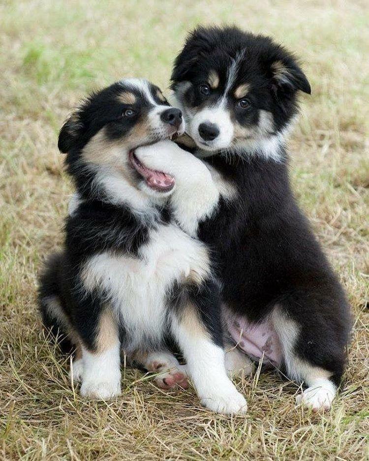 Kleine Hunderassen - Kleine Hunderassen