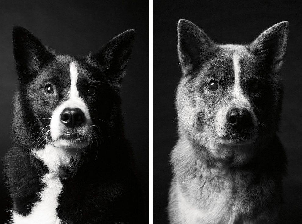 schäferhund kleine rasse  bilder und sprüche für whatsapp