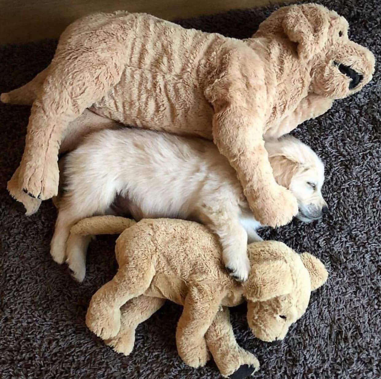 Kleine Langhaar Hunde - Kleine Langhaar Hunde