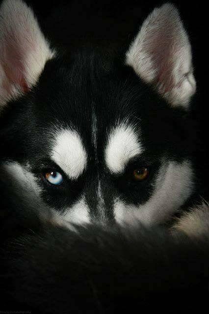 Kleine Lockige Hunderassen - Kleine Lockige Hunderassen