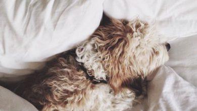 Kleine Mischlingshunde Bilder Für Facebook 390x220 - Kleine Mischlingshunde Bilder Für Facebook