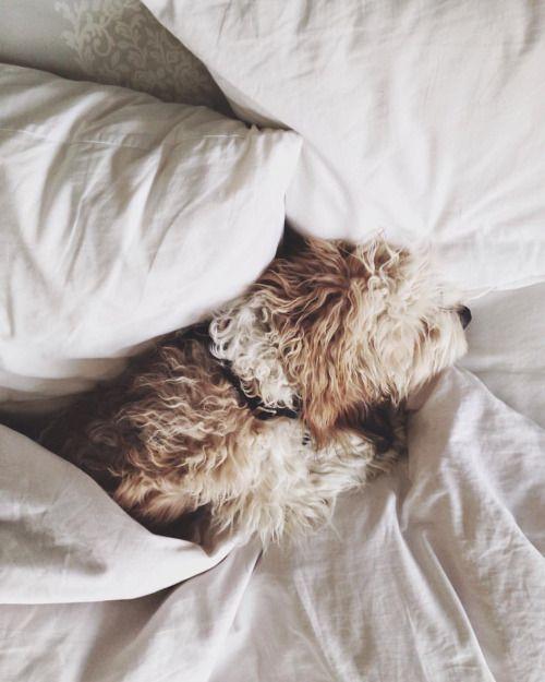 Kleine Mischlingshunde Bilder Für Facebook - Kleine Mischlingshunde Bilder Für Facebook