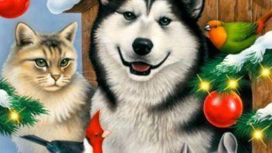 Kleine Mischlingshunde Bilder Für Whatsapp 390x220 - Kleine Mischlingshunde Bilder Für Whatsapp