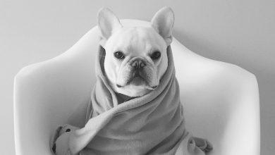 Kleine Mischlingshunde Bilder Kostenlos 390x220 - Kleine Mischlingshunde Bilder Kostenlos