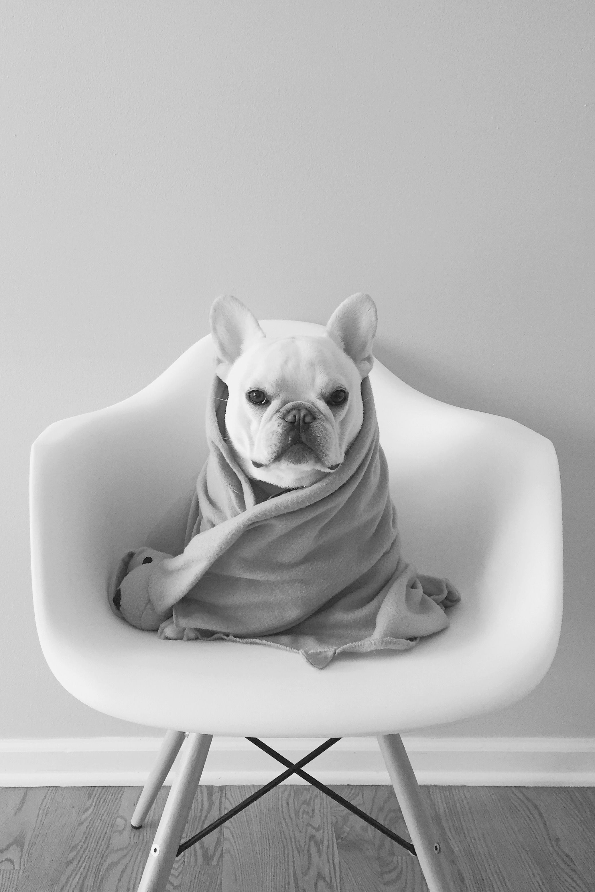 Kleine Mischlingshunde Bilder Kostenlos - Kleine Mischlingshunde Bilder Kostenlos