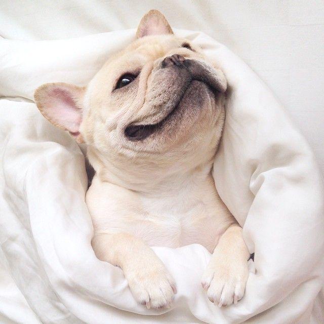 Kleine Schäferhundrassen - Kleine Schäferhundrassen