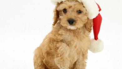 Kleine Und Mittelgroße Hunderassen 390x220 - Kleine Und Mittelgroße Hunderassen