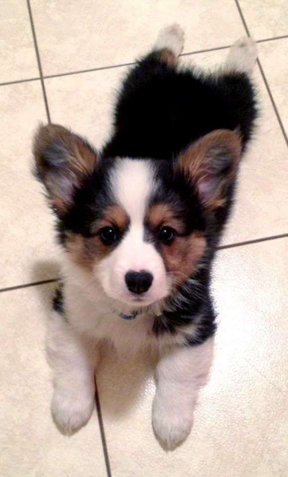 Kleine Und Mittlere Hunderassen - Kleine Und Mittlere Hunderassen