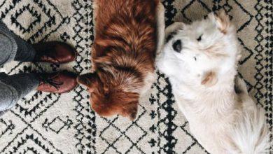 Kleine Weiße Hunde Bilder Für Facebook 390x220 - Kleine Weiße Hunde Bilder Für Facebook
