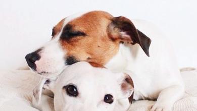 Kleine Weiße Hunde Bilder Kostenlos 390x220 - Kleine Weiße Hunde Bilder Kostenlos