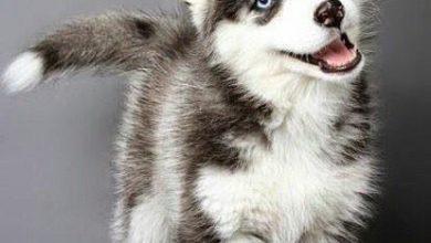 Kleine Weiße Hunde Bilder Kostenlos Herunterladen 390x220 - Kleine Weiße Hunde Bilder Kostenlos Herunterladen