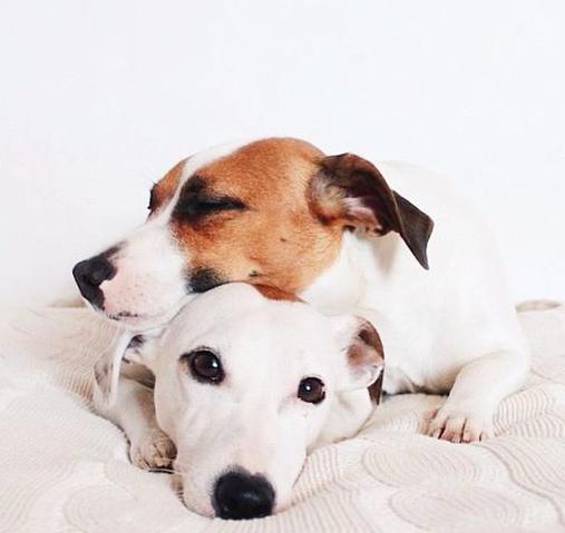 Kleine Weiße Hunde Bilder Kostenlos - Kleine Weiße Hunde Bilder Kostenlos