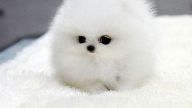 Kleiner Brauner Hund 390x220 - Kleiner Brauner Hund