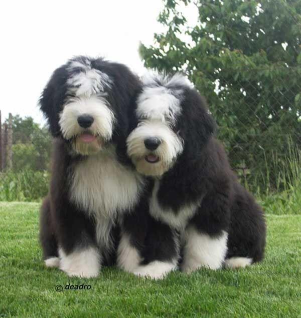 Kleiner Brauner Hund Rasse - Kleiner Brauner Hund Rasse