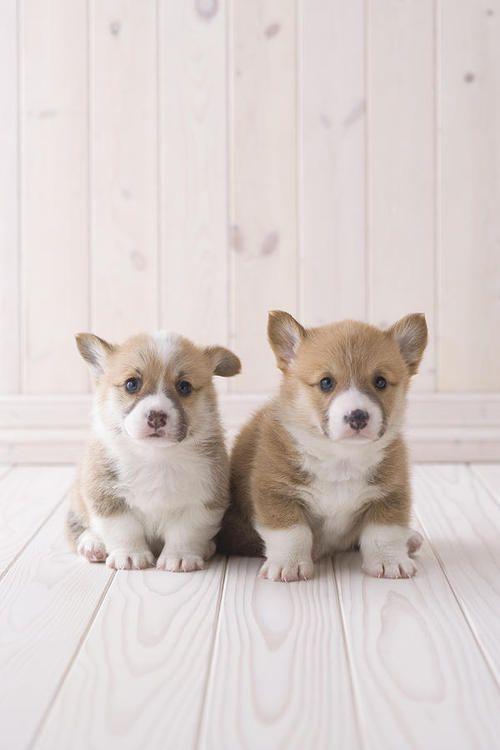 Kleiner Grauer Hund - Kleiner Grauer Hund