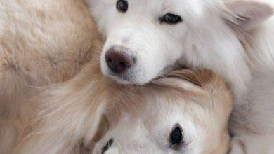 Kleiner Husky Ähnlicher Hund 390x220 - Kleiner Husky Ähnlicher Hund