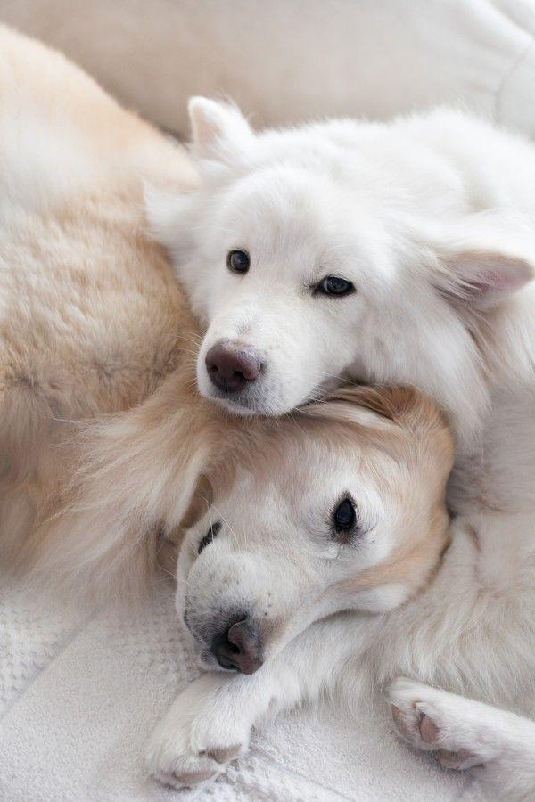 Kleiner Husky Ähnlicher Hund - Kleiner Husky Ähnlicher Hund