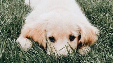 Kleiner Lockiger Hund 390x220 - Kleiner Lockiger Hund