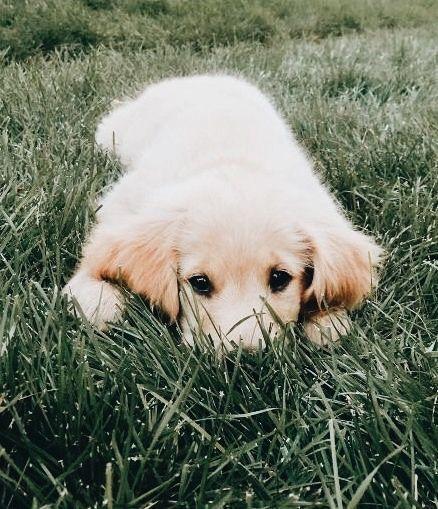 Kleiner Lockiger Hund - Kleiner Lockiger Hund