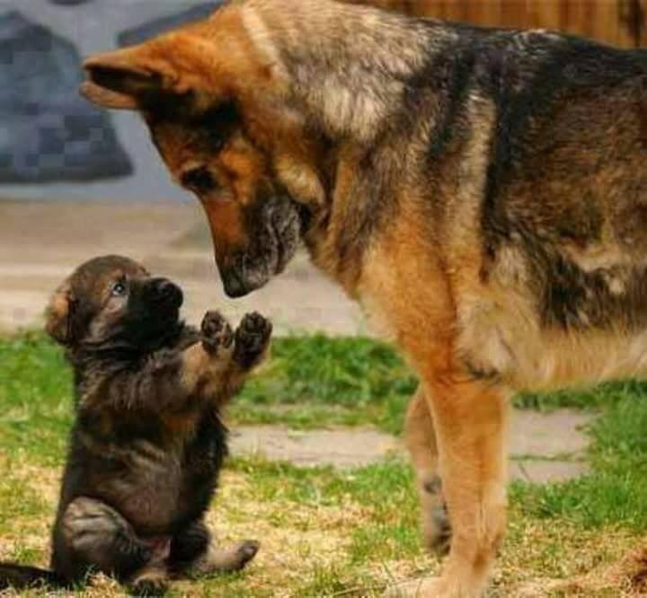 Kleiner Süßer Hund Rasse - Kleiner Süßer Hund Rasse