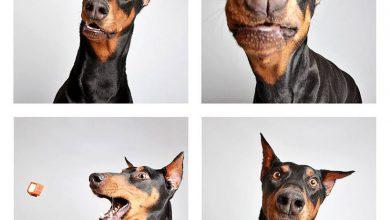 Kleiner Schäferhund 390x220 - Kleiner Schäferhund