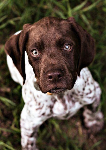 Kleinste Hunderasse Der Welt Wikipedia - Kleinste Hunderasse Der Welt Wikipedia
