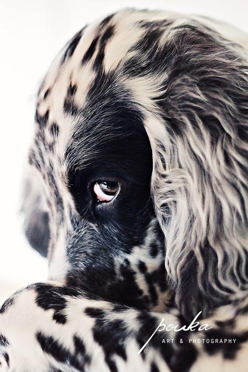 Kleinste Hunderasse - Kleinste Hunderasse