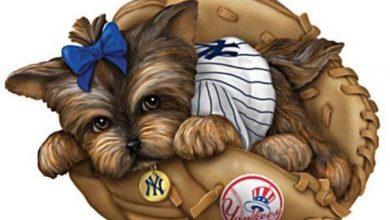 Kleinsthunderassen Bilder Für Facebook 390x220 - Kleinsthunderassen Bilder Für Facebook