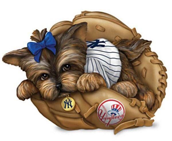 Kleinsthunderassen Bilder Für Facebook - Kleinsthunderassen Bilder Für Facebook