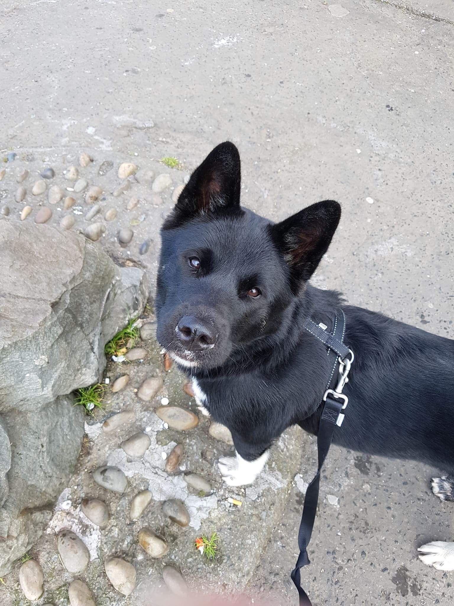 Kleinsthunderassen Bilder Für Whatsapp - Kleinsthunderassen Bilder Für Whatsapp