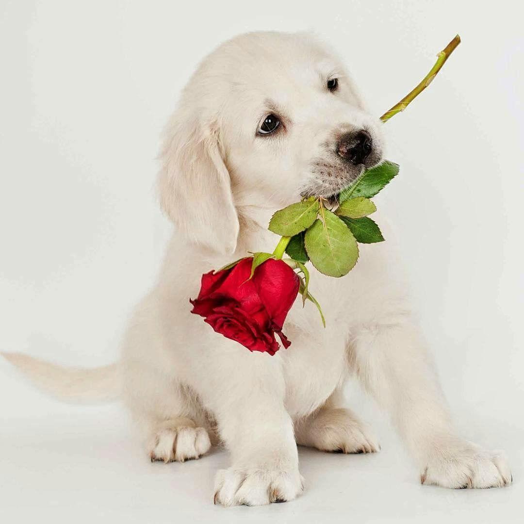 Kleintier Hunderassen - Kleintier Hunderassen