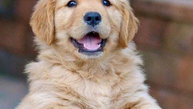 Komische Hunde Bilder 390x220 - Komische Hunde Bilder