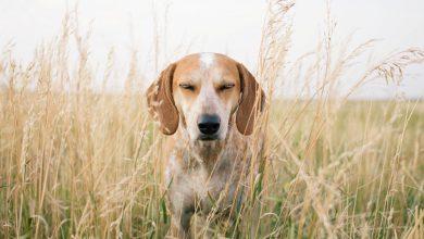 Komische Hunde Bilder Für Facebook 390x220 - Komische Hunde Bilder Für Facebook