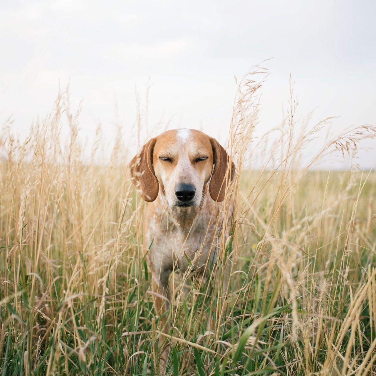 Komische Hunde Bilder Für Facebook - Komische Hunde Bilder Für Facebook