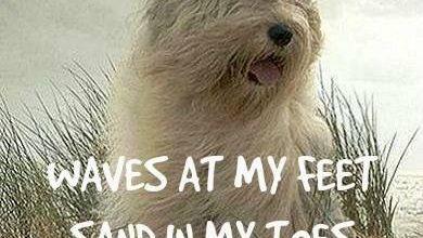 Komische Hunde Bilder Kostenlos Herunterladen 390x220 - Komische Hunde Bilder Kostenlos Herunterladen