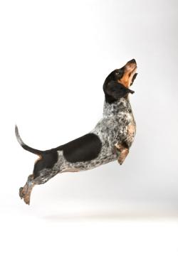 Komische Hunde Bilder Kostenlos - Komische Hunde Bilder Kostenlos