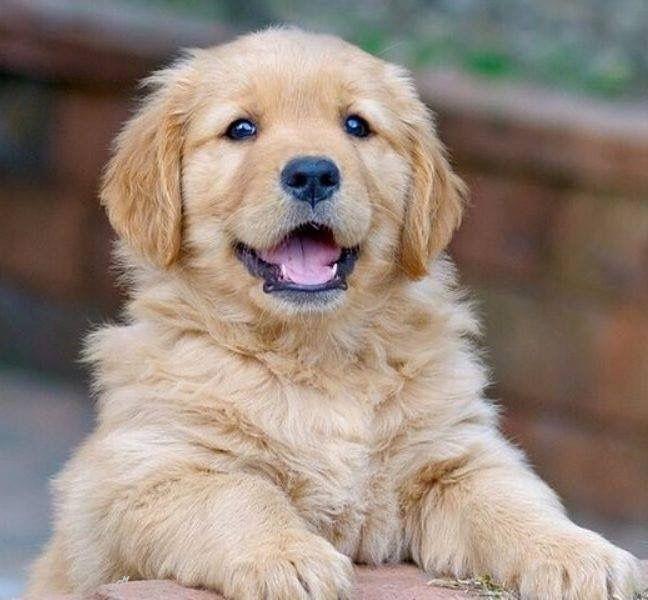 Komische Hunde Bilder - Komische Hunde Bilder