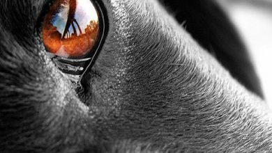 Kostenlose Hunde Bilder 390x220 - Kostenlose Hunde Bilder
