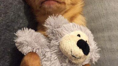 Kostenlose Hunde Bilder Für Facebook 390x220 - Kostenlose Hunde Bilder Für Facebook